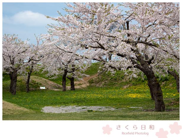 201205_50D_2982.jpg