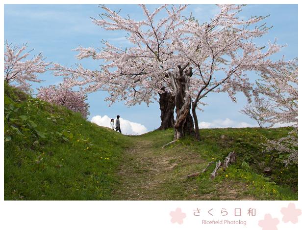 201205_50D_2989.jpg