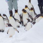 旭山動物園 '09冬