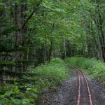 新緑・森のトロッコ