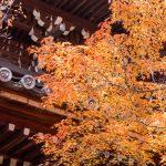 紅葉の京都 '13 真如堂・永観堂・南禅寺