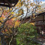 紅葉の京都 '13 #2 永観堂