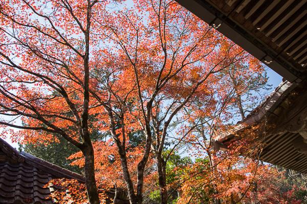 紅葉の京都 '14 #05 西明寺