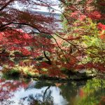 紅葉の京都 '14 #11 金戒光明寺