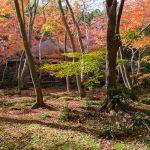 紅葉の京都 '14 #15 祇王寺