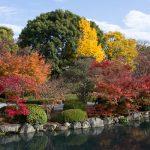 紅葉の京都 '14 #16 東寺