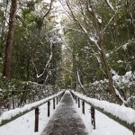 雪の京都 '15 #2 大徳寺