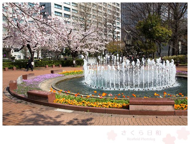 東京 さくら sakura