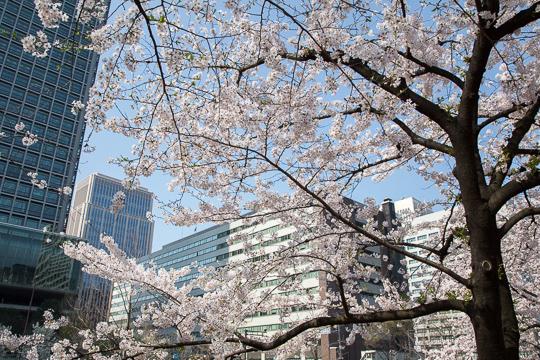 東京さくら日和 '15