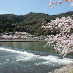 京都さくら日和 '15 嵐山