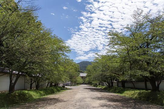 真夏の京都 '15 #1 醍醐寺