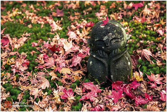 紅葉の京都 '15 圓光寺・金福寺