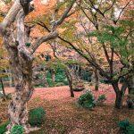 紅葉の京都 '15 #6 圓光寺