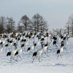冬の道東 '17 釧路湿原