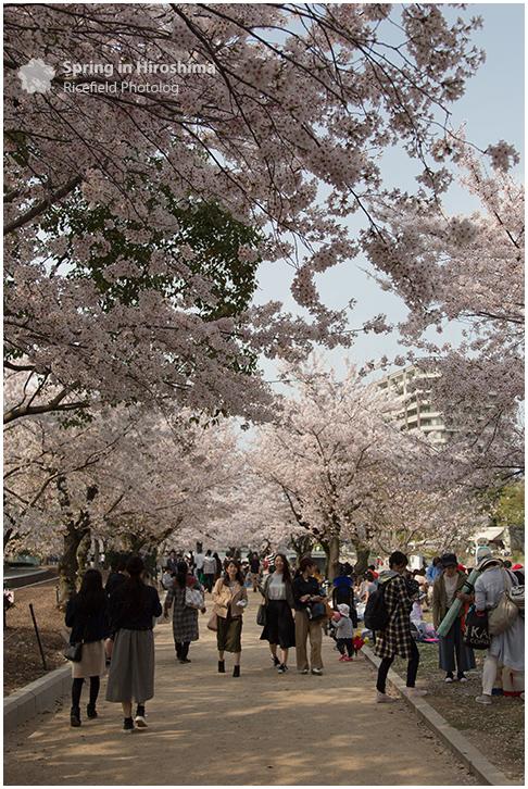 さくら 広島 Hiroshima